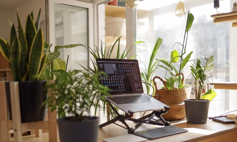 plantas para mejorar tu vida